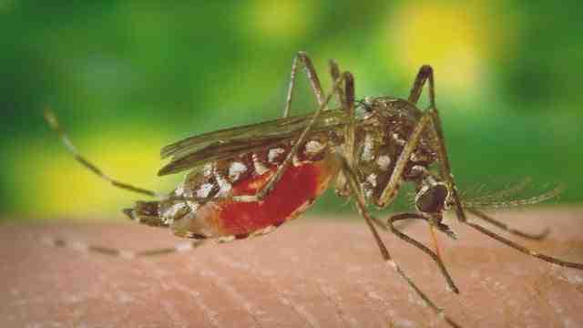Comment faire sortir un moustique de sa cachette ?