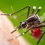 Comment ne pas entendre les moustiques ?