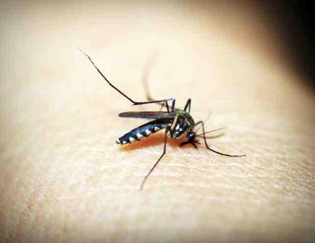 Comment repousser les moustiques sur la peau ?