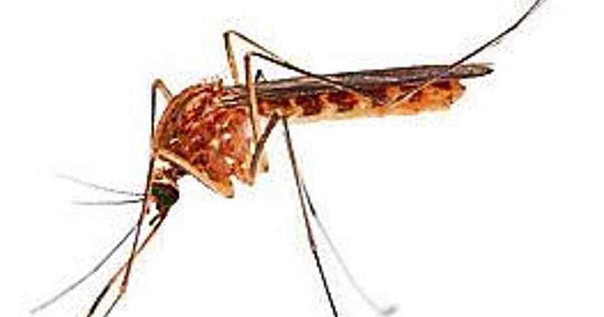 Comment se débarrasser de moustiques ?