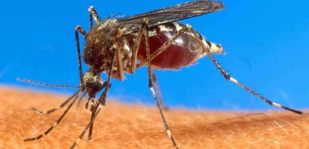 Comment s'habiller pour ne pas attirer les moustiques ?