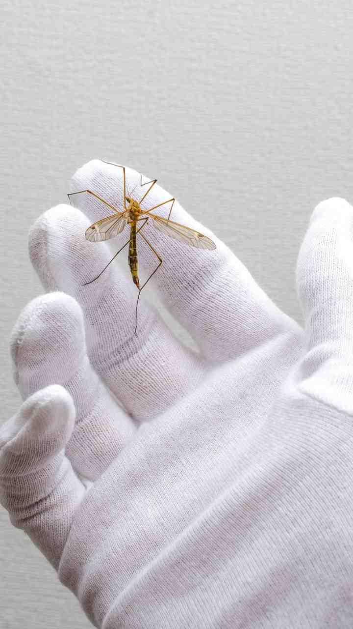Est-ce que la lavande fait fuir les moustiques ?