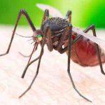 Est-ce que le vinaigre éloigne les moustiques ?