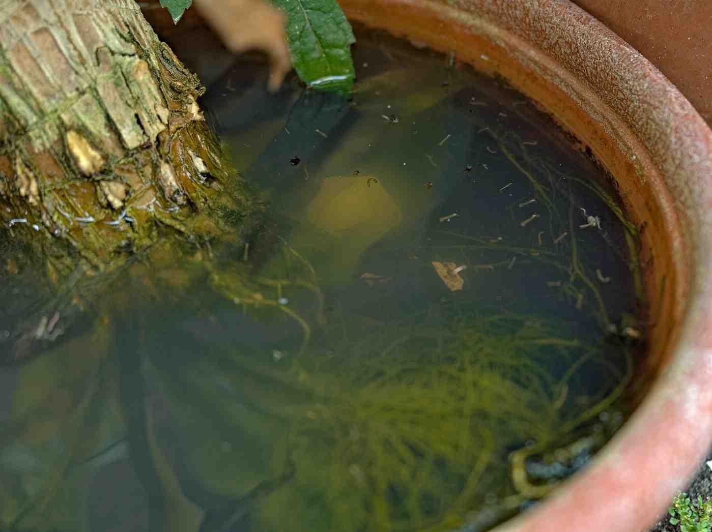 Est-ce que l'eau attire les moustiques ?
