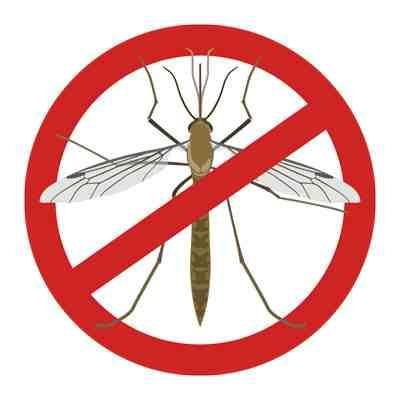 Quand les moustiques attaquent ?