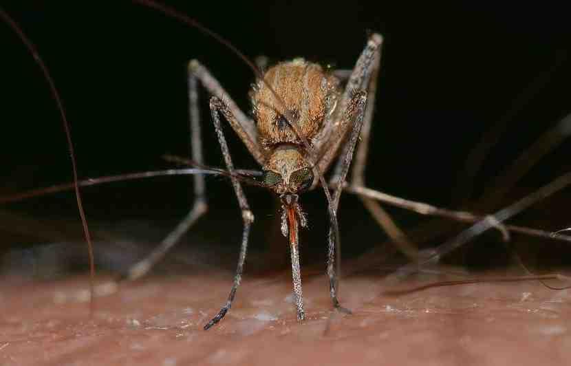 Quel est le meilleur appareil Anti-moustique extérieur ?