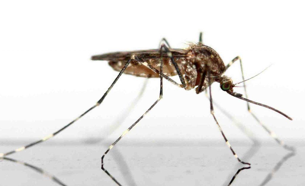 Quel vinaigre contre les moustiques ?