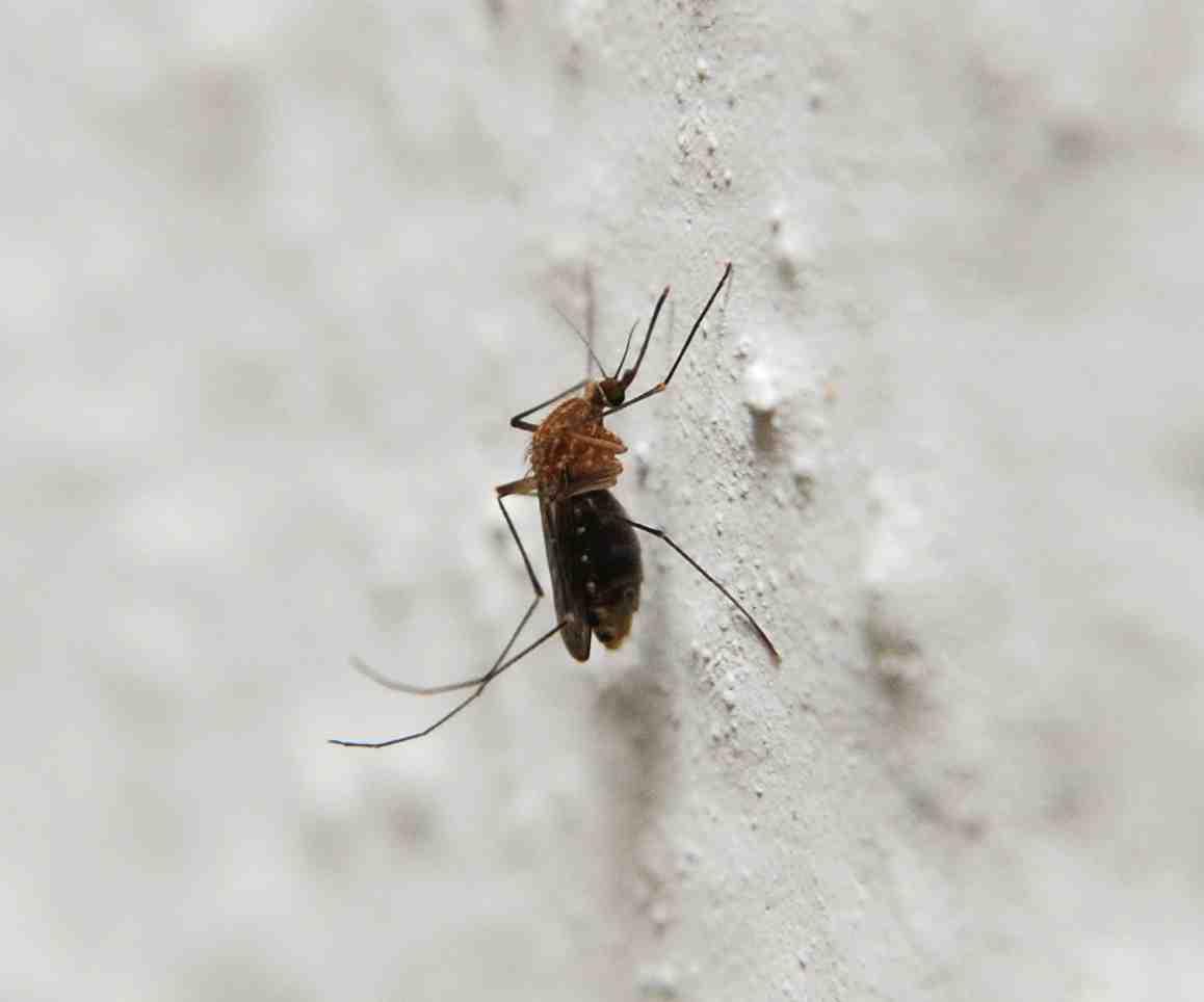 Quelle est la couleur qui repousse les moustiques ?