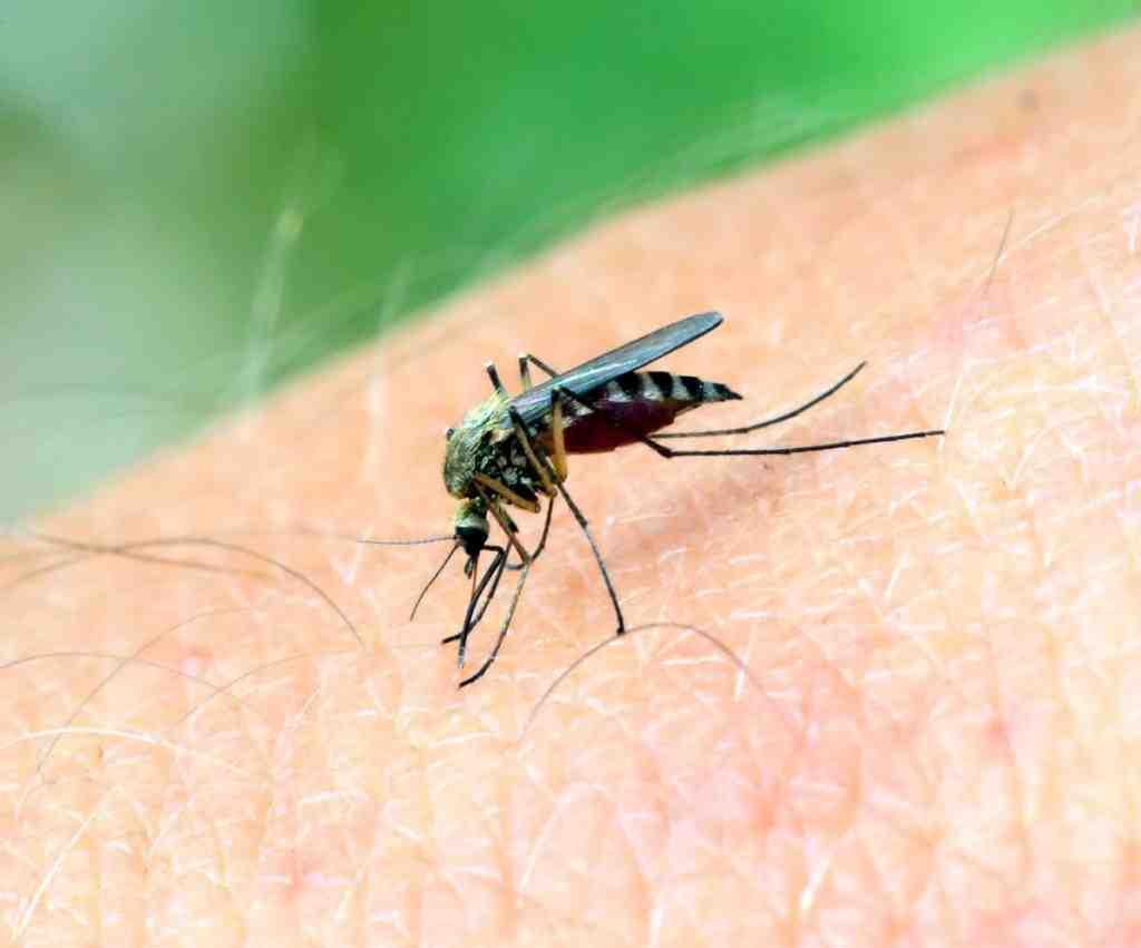 Qu'est-ce qui attire les moustiques dans une maison ?