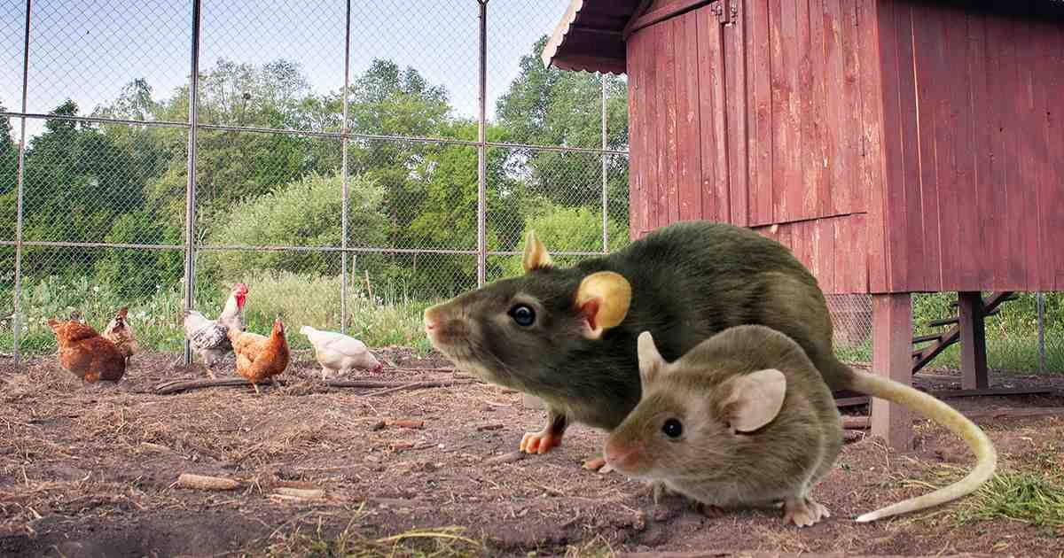 C'est quoi qui attire les souris ?