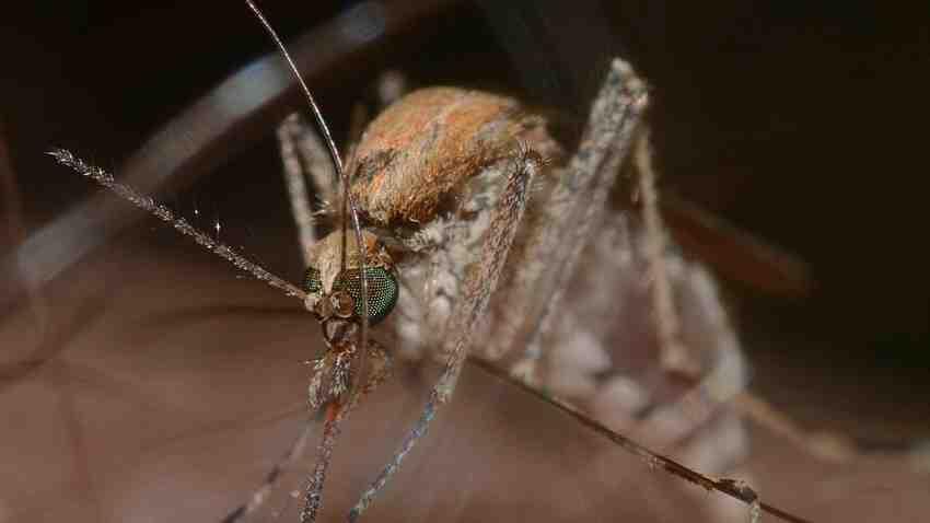 Comment éloigner les moustiques sur la peau ?