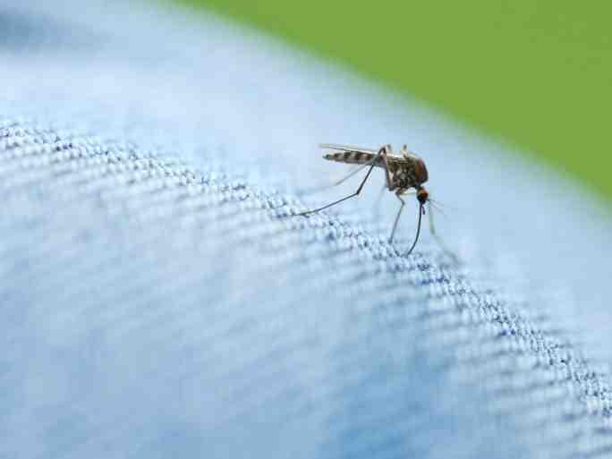 Comment faire fuir les moustiques la nuit ?