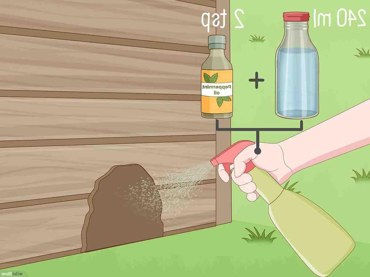 Comment faire pour attraper une souris ?