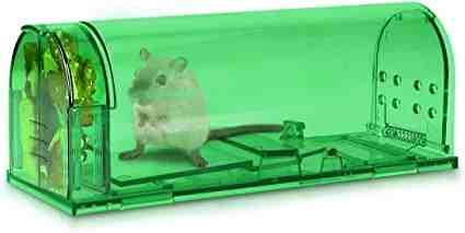Comment pieger une souris dans une maison ?