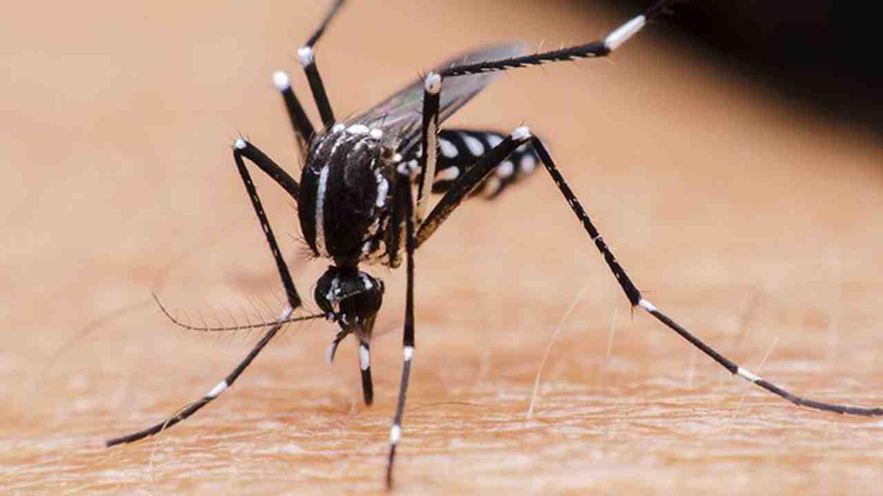 Comment se débarrasser des moustiques dans la maison ?