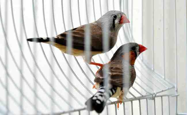 Où acheter une cage pour oiseaux ?