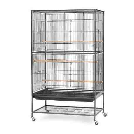Quel oiseau pour une petite cage ?