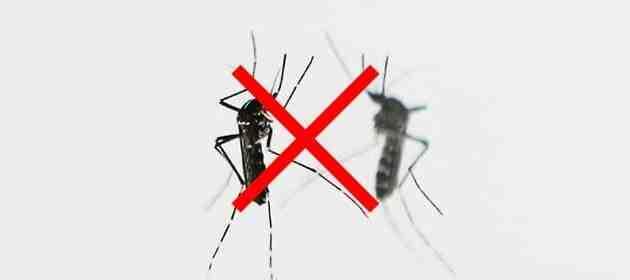 Qu'est-ce que les moustiques détestent ?