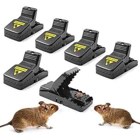 Qu'est-ce qui attire le plus les souris ?