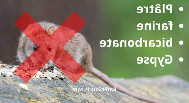C'est quoi qui attire les rats ?