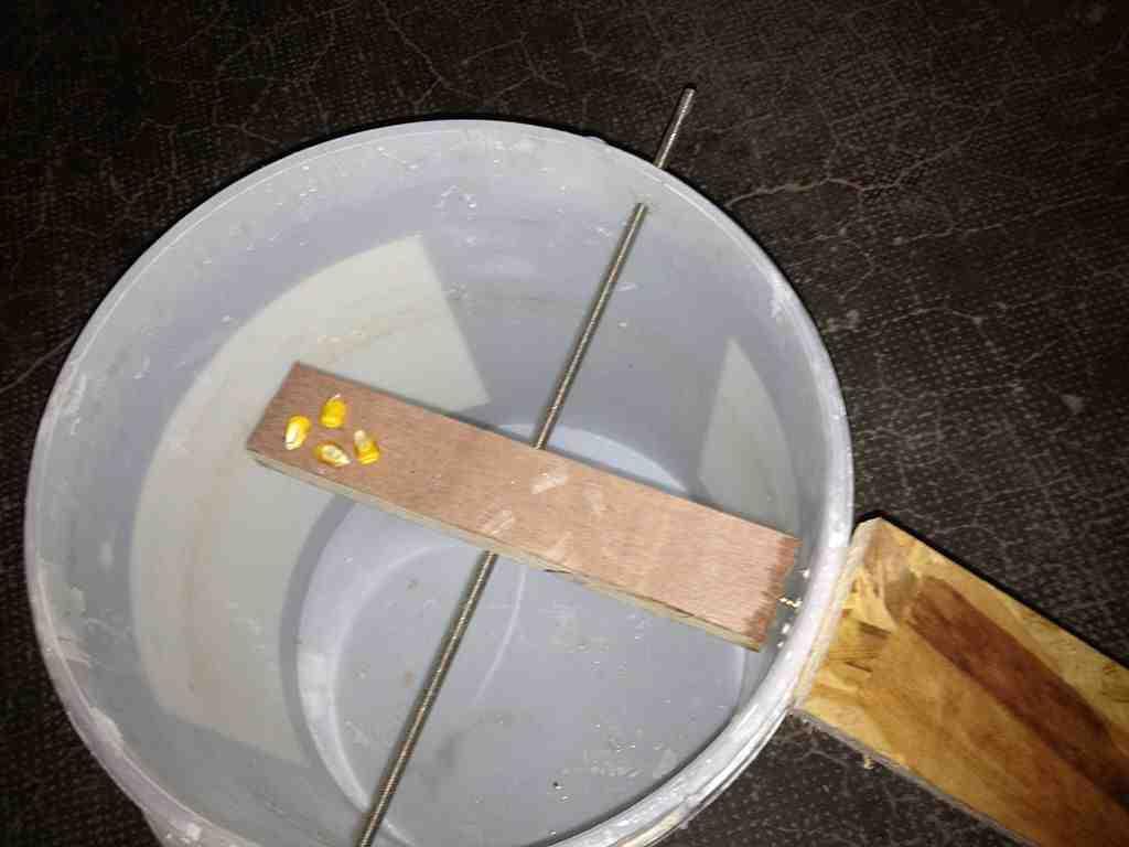Comment électrocuter des rats ?