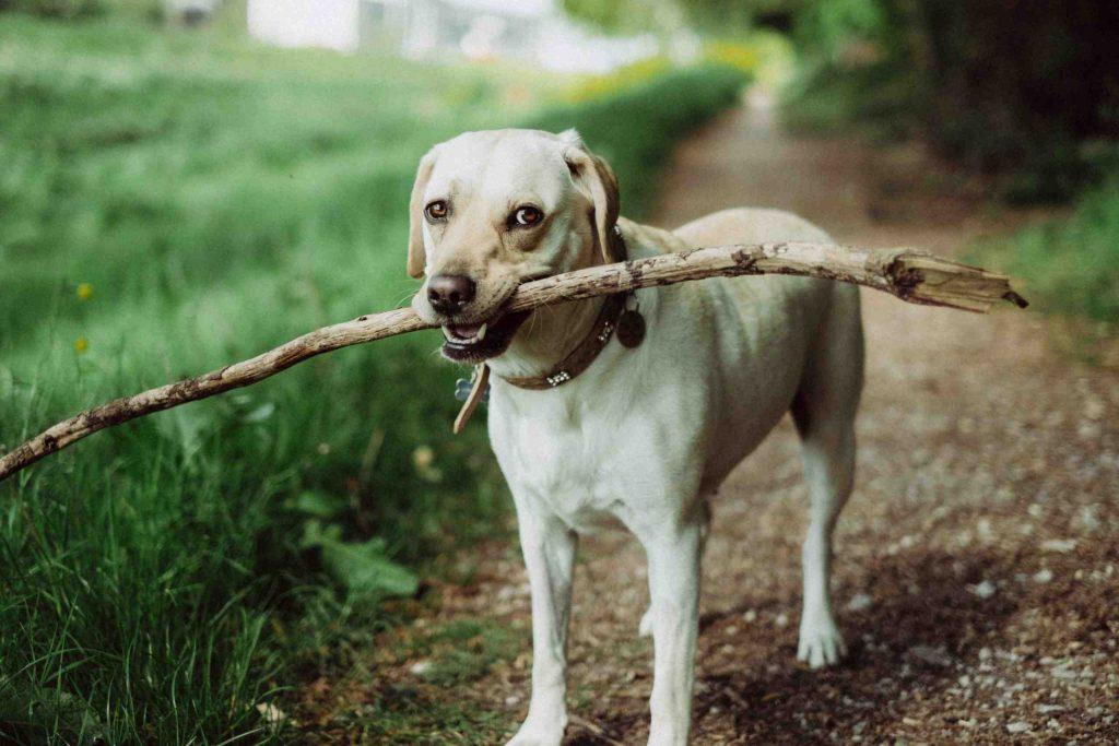 Quelles sont les odeurs que les chiens n'aiment pas ?