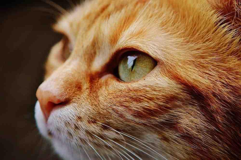 Comment dégoûter un chat ?