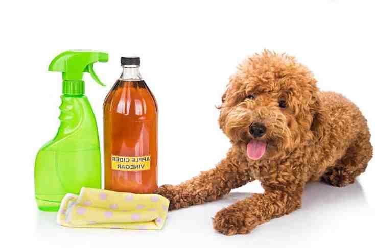 Comment déjouer l'odorat d'un chien ?