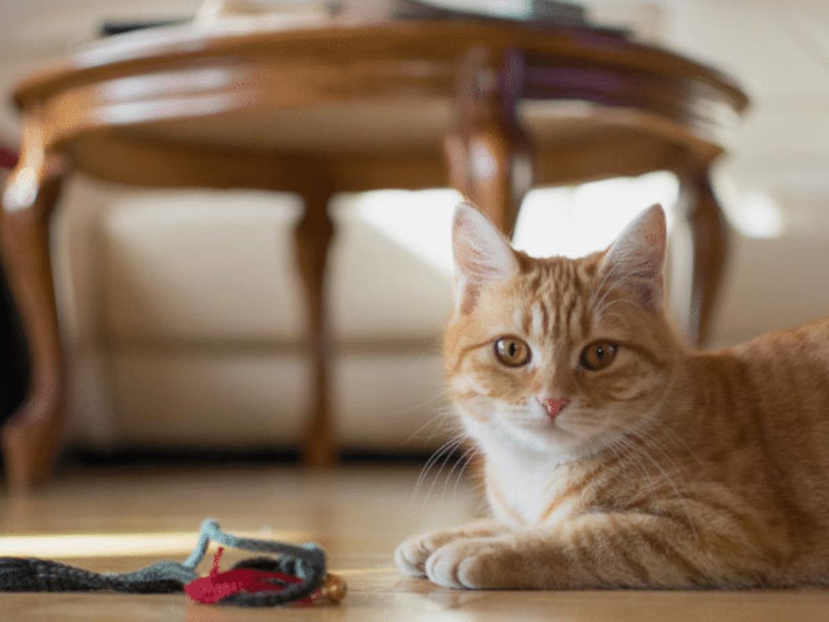 Comment éloigner les chats des plantes vertes ?