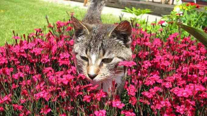 Comment empêcher un chat de faire pipi dans une plante ?