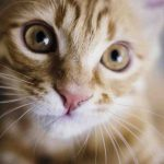 Comment empêcher un chat de faire ses besoins à un endroit ?