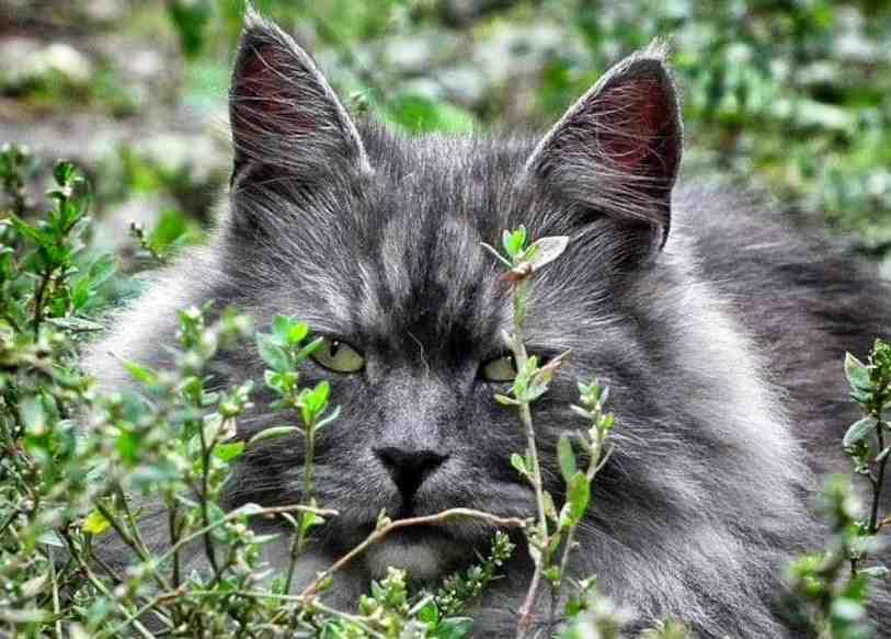 Comment fabriquer un répulsif pour chat ?