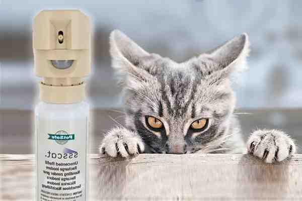 Comment faire du Repulsif pour chat extérieur ?