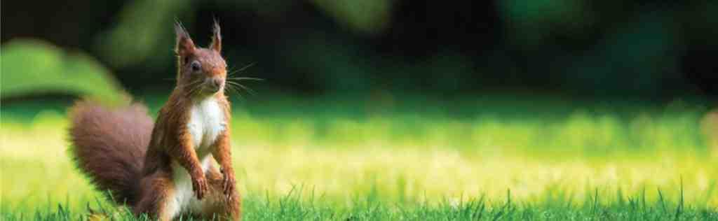 Comment faire fuir les chats de mon terrain ?