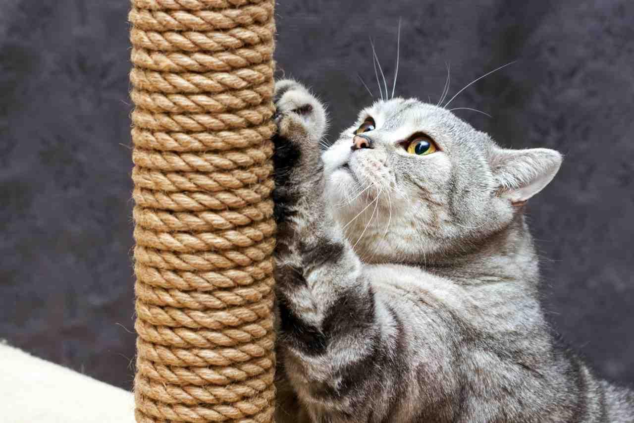 Comment faire fuir un chat qui embête le mien ?