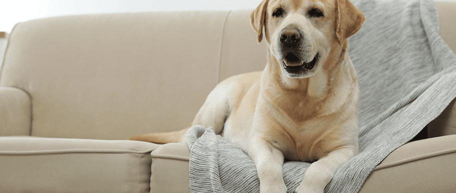 Comment faire pour empêcher un chien d'uriner partout ?
