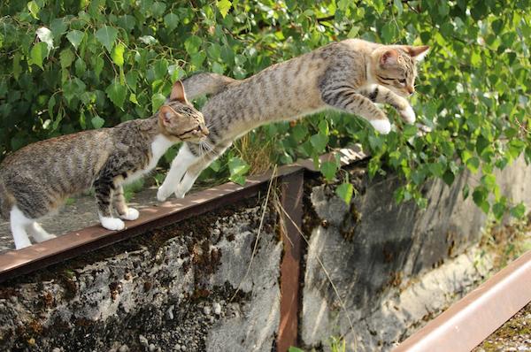 Comment faire pour se débarrasser d'un chat ?