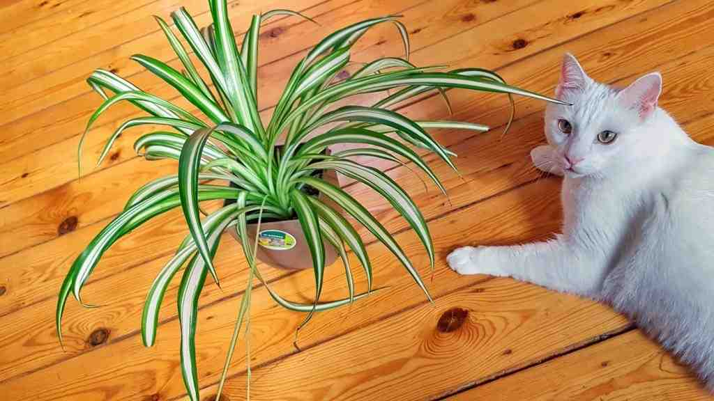 Comment protéger une plante d'un chat ?