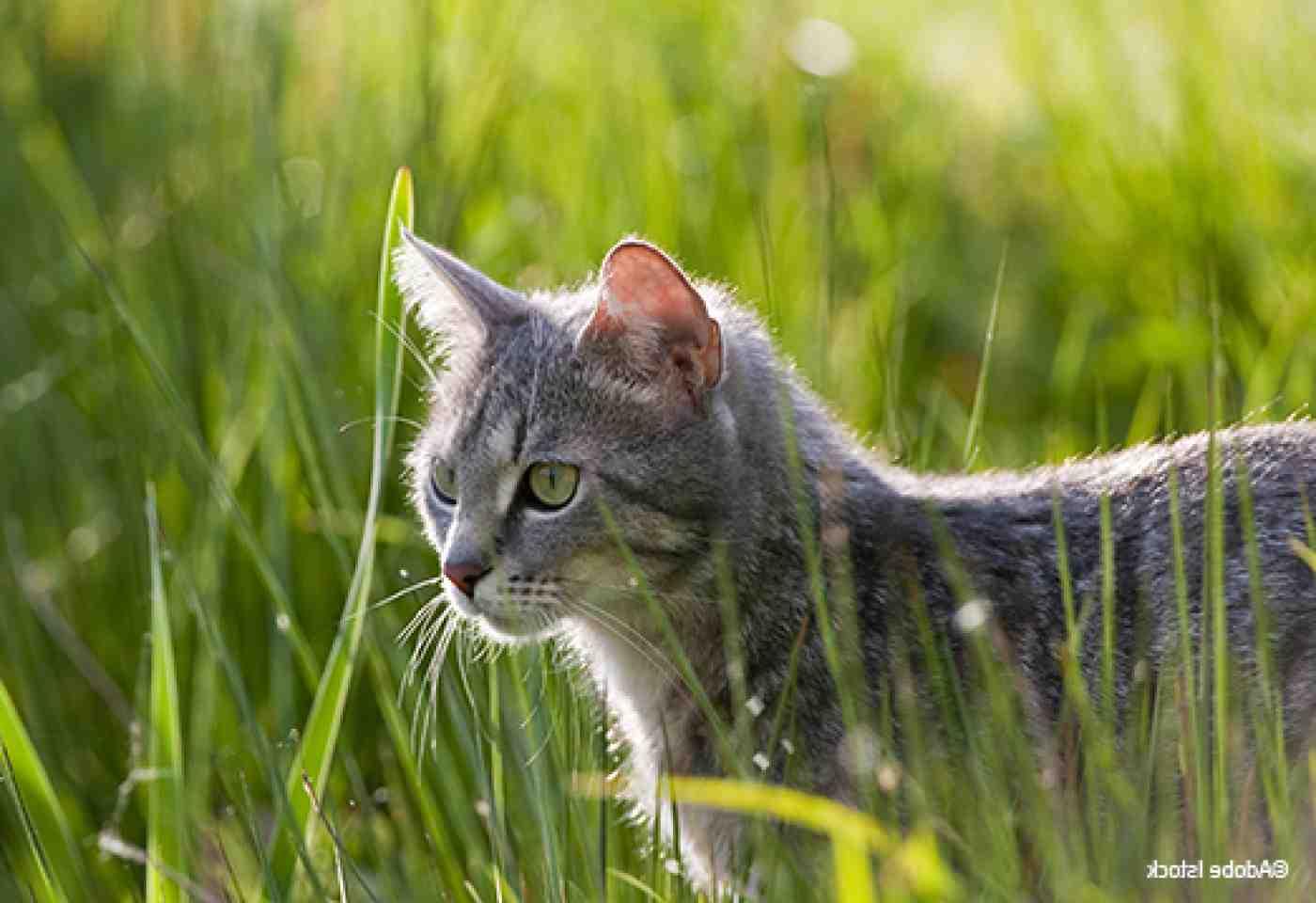Comment se débarrasser des chats errants ?