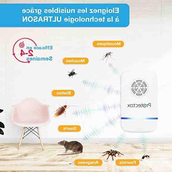 Comment se débarrasser des souris définitivement et naturellement ?