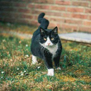 Quel Repulsif chat ultrason choisir ?