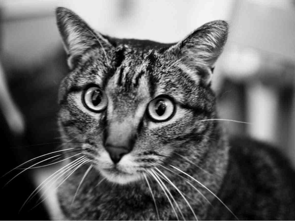 Quel aliment peut tuer un chat ?