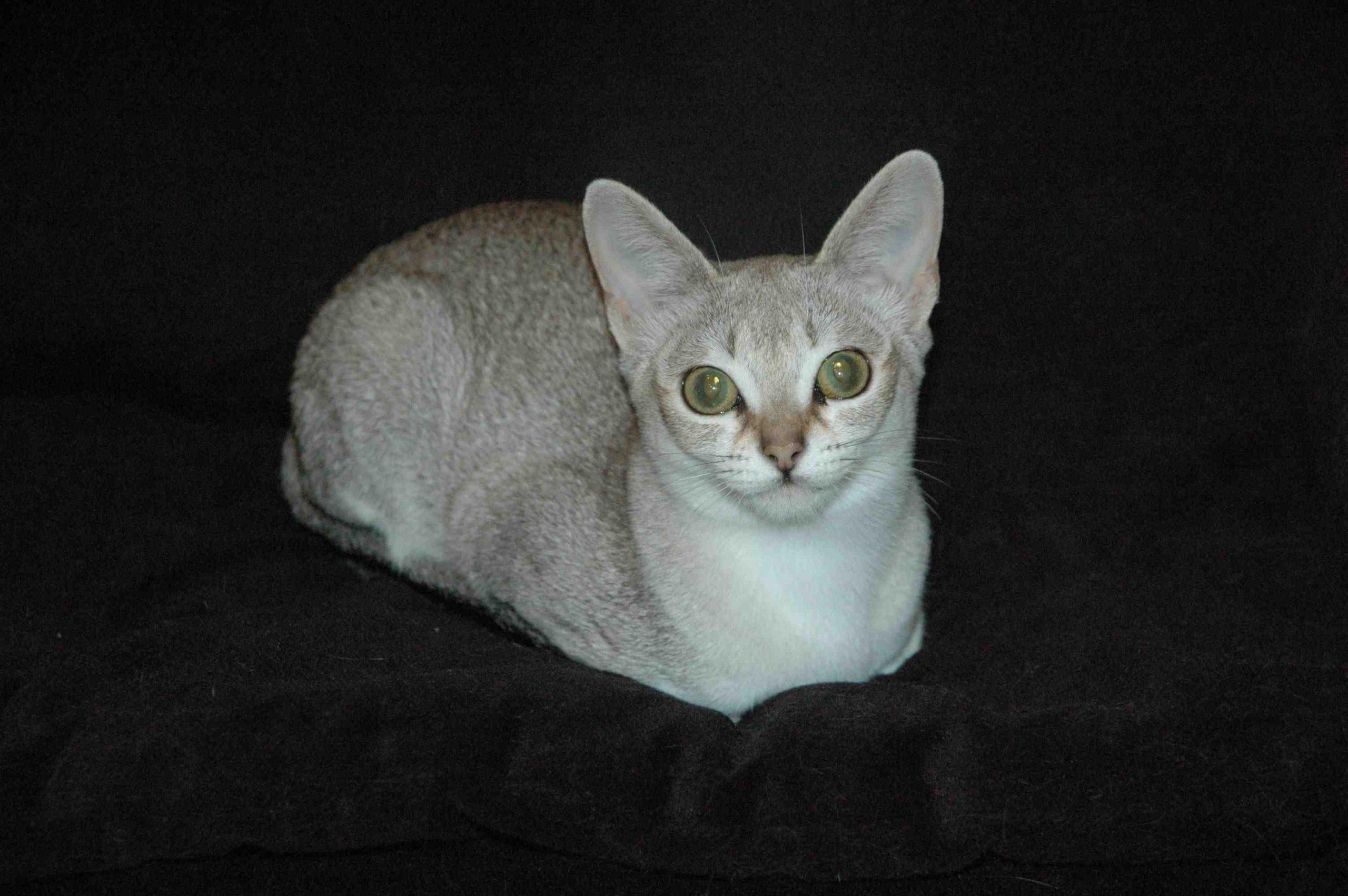 Quel est le meilleur Repulsif pour chat ?