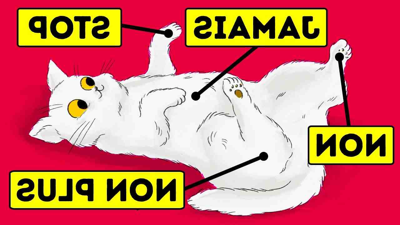 Quelle est l'odeur que les chats détestent ?