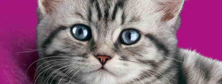 Quelle est l'odeur que les chats détestent le plus ?