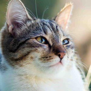 Quelle fréquence pour repousser les chats ?
