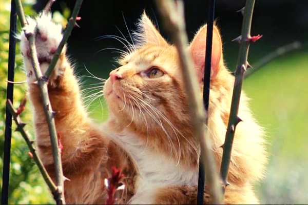Quelle fréquence ultrason pour chat ?