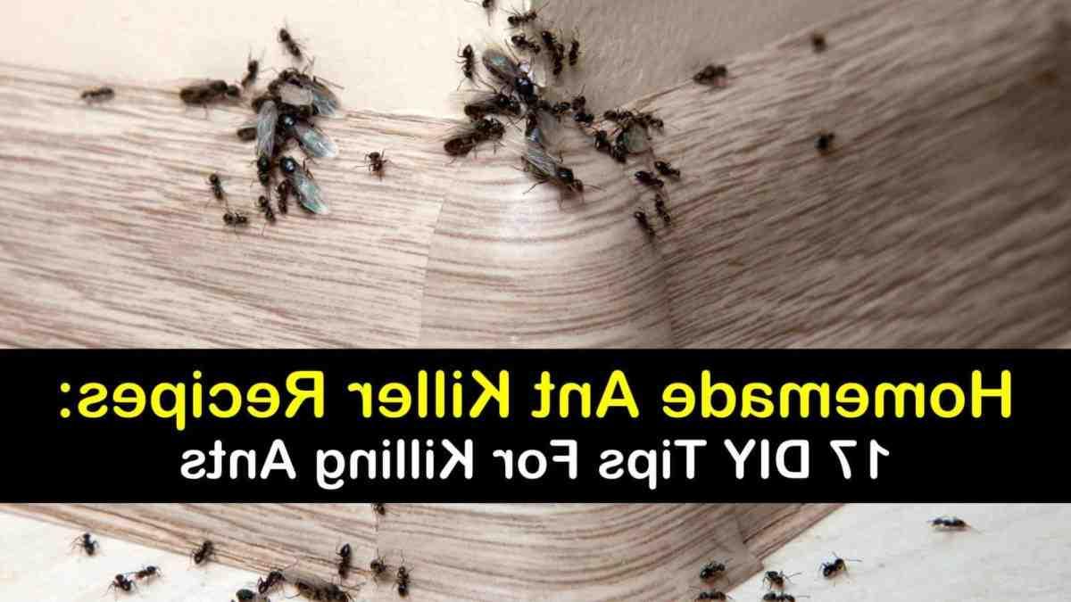 Comment empêcher les insectes de rentrer dans la maison ?