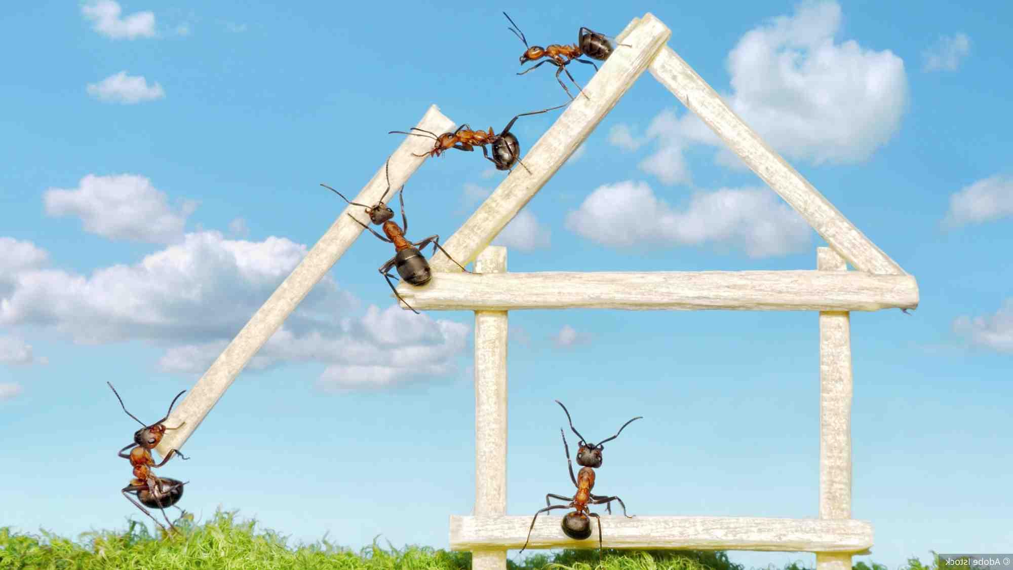 Comment empêcher les mouches de rentrer à la maison ?