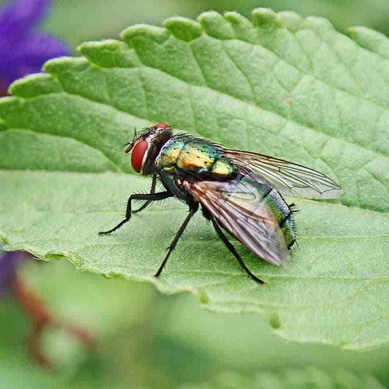 Comment en finir avec les mouches dans la maison ?